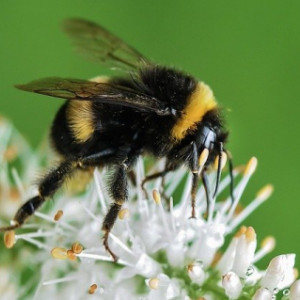 Bee Pest Control & Bee Swarms