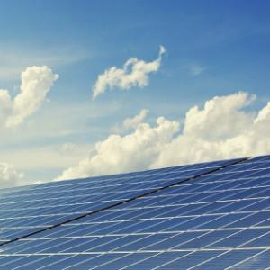Solar Panel Bird Control