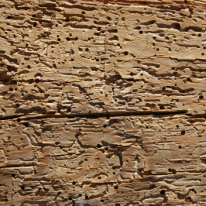 Woodworm Treatment for Holes