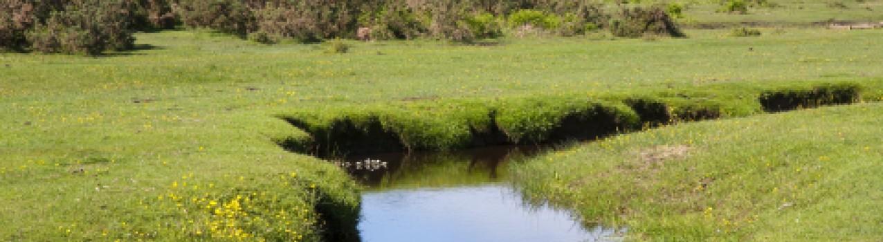 Pest Control in Saffron Walden