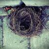 Bird Control Braintree